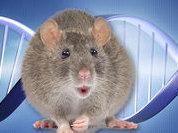 Gene control regions protected negating evolution