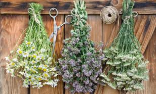 Herbal culinary seasonings could be used against COVID-19, scientists believe