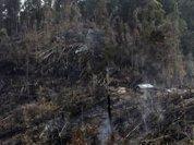 Amazon: Deforestation falls by 44%