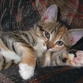Extrasensorial abilities of cats strike imagination