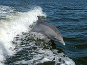 Dolphin alert!