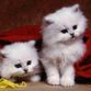 Cats: most interesting facts about common domestic pets