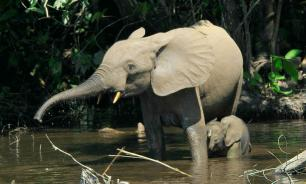 Japan: Ban ivory trade or we boycott Olympics
