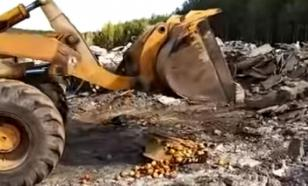 FSB conducts special operation to destroy sanctioned apples