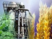 Biofuel pushes millions of people towards poverty