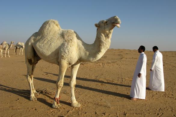 Saudi Arabia falls first on the battlefield of oil war