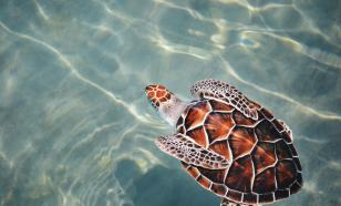 Healthy oceans: keeping Asia and the Pacific afloat