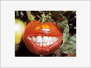 USA To Establish Genetically Modified Totalitarian Regime on World Food Market
