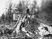 Left tree felling