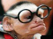 Scientists fear medical research will create talking monkeys