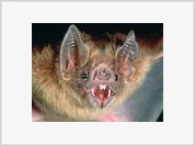 Vampire Bats Spread Rabies Terror