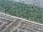 Amazon: Increase in deforestation