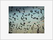 Wildfires Decimate Russian Bat Population