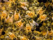 Toxic pesticides or bees: The choice
