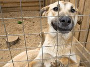 Ukraine uses mobile crematoriums to destroy homeless dogs