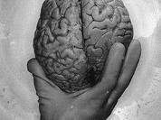 Studies affect brain growth