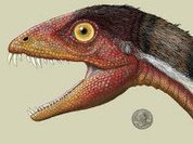 'Demon reptile' is not a missing link