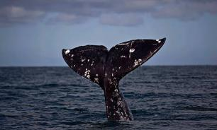 Dead whale causes commotion in Russia's Far East