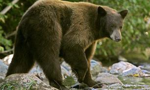 Woman gives birth in Siberian taiga as police scare bears off