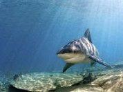 EU closes loopholes in shark finning