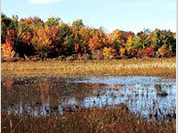 Siberian Bogs Contain Global Warming