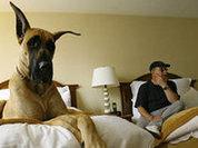 Sleeping with pets: Comfortable discomfort