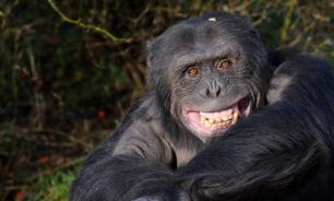 Thousands of Buenos Aires zoo animals were left to die in cages