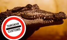 Two Siamese crocodiles arrested at Yekaterinburg airport