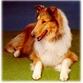It's official: Dogs can understand human speech