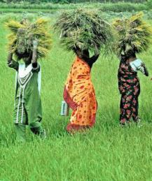 Changes are on the way for women farmers