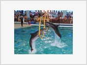 Moscow Dolphinarium Turns into Torture Chamber for Dolphins