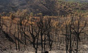 Portugal: Forest Fires, Tragedy and Strategic Opportunities