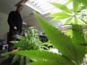 High on marijuana brownies