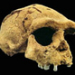 Hominids talked 500 000 years ago