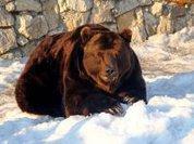 Russia's wildlife record