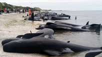 Whales kil themselves, schol buses crash, wildfires rage