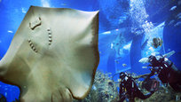 Launched late last year, Marine Life Park covers eight hectares on the resort island of Sentosa, and includes SEA Aquarium and Adventure Cove Waterpark. SEA Aquarium is the world's largest aquarium