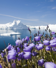 Greenland, Land of color