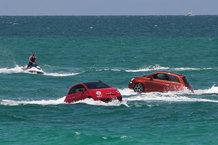 Amphibious Sea Lion, fastest on land and at sea