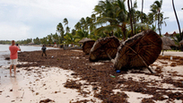 Having brought considerable destruction to the Carribbean Islands, Irma is moving towards Florida, sowing chaos and death. Irma, which has been downgraded to a tropical storm, has already taken several lives in the United States, and the death toll is expected to rise. In the Carribbean, Irma has killed 37 people