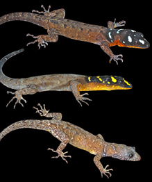 Hundreds of new species discovered in Amazon region