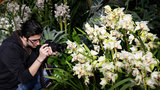 The 12th Annual Orchid Show brings an award-winning modernist Key West Estate Garden to New York. A lush tropical garden, vibrant architecture, and thousands of orchids. The orchid show will run at The New York Botanical Garden through Monday, April 21, 2014