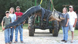 A monster alligator weighing 1011.5 pounds measuring 15-feet long is pictured in Thomaston, Ala. The alligator was caught in the Alabama River near Camden, Alabama