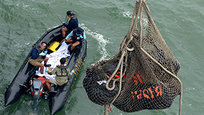 Divers and an unmanned underwater vehicle spotted the tail of the missing AirAsia plane in the Java Sea on Wednesday, the first confirmed sighting of any major wreckage 11 days after Flight 8501 disappeared with the passengers and crew members on board