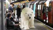A realistic  polar bear  seen wandering the streets of London and even riding the city s subway was a high-tech puppet (All photos: Splash/All Over Press)