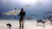 Biologist puts 50 sharks in a trance