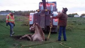 Animals have bad days too