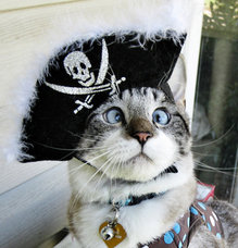 Cross-eyed pirate cat conquers Internet